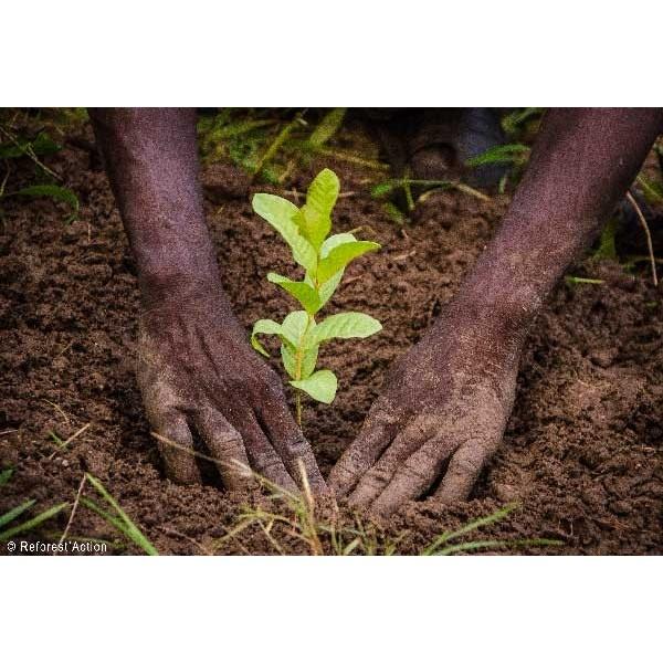 1 arbre plant avec reforest 39 action sports de glace france for Achat plante sur internet